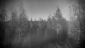 Trees in a swamp at circle b reserve in polk county florida