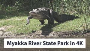 Myakka River State Park & Deep Hole Cinematic 4K Nature Video and Review