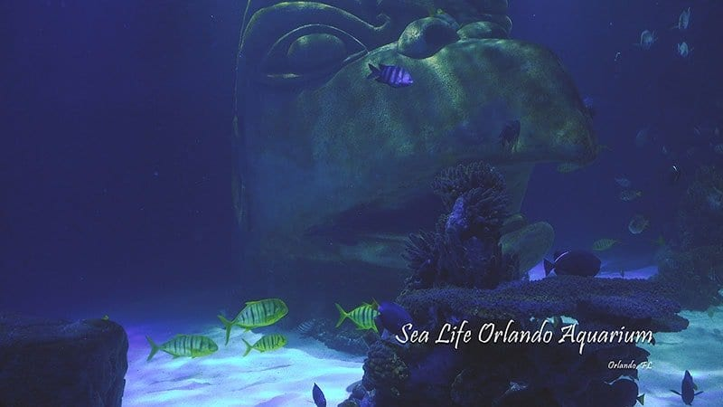 Sea Life Orlando Aquarium Cinematic 4K Wildlife Video