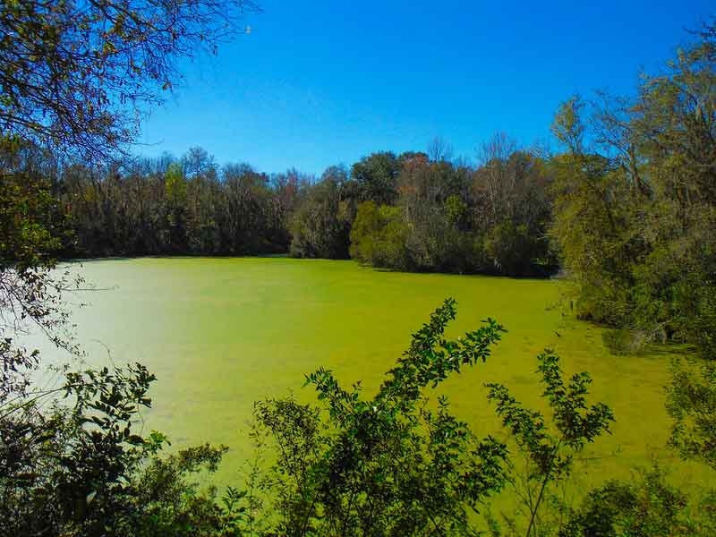 Alafia River State Park Hiking Review