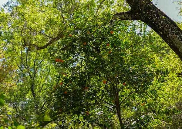 stewart homestead murders orange tree outside of cabin