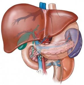 Diabetes And The Liver