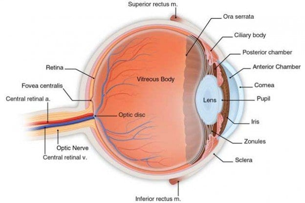 Diabetic Retinopathy: An Overview